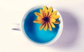 Cup And Flower White Background