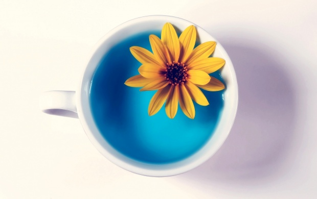 Cup And Flower White Background (click to view)