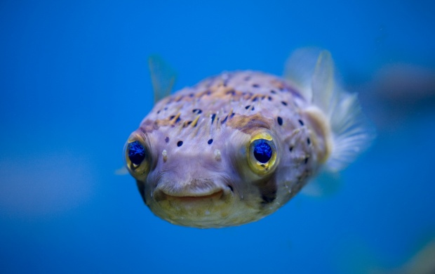 Curious Fish (click to view)