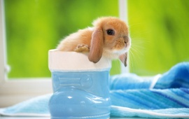 Cute Baby Bunny In Blue