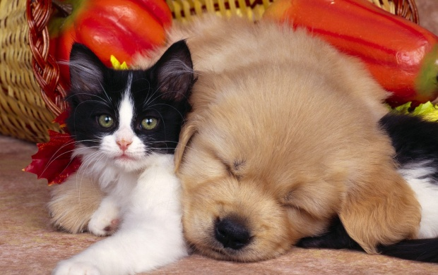 Cute Cat and Dog (click to view)
