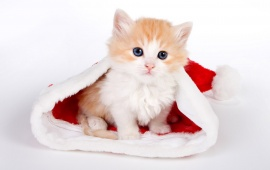Cute Cat In Santa Hat