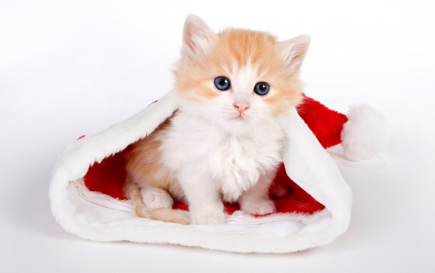 Cute Cat In Santa Hat (click to view)