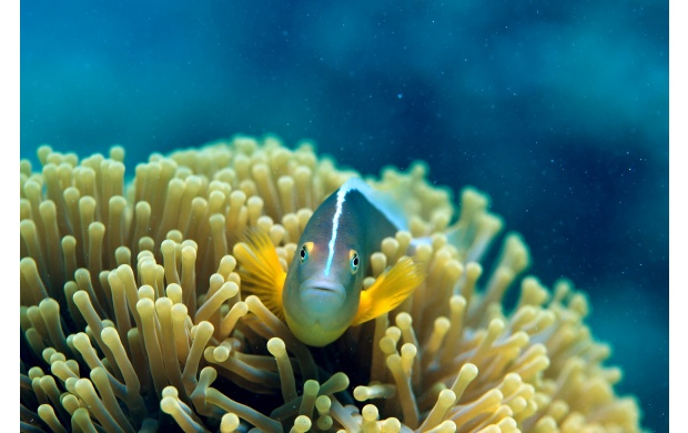 Cute Coral Fish (click to view)