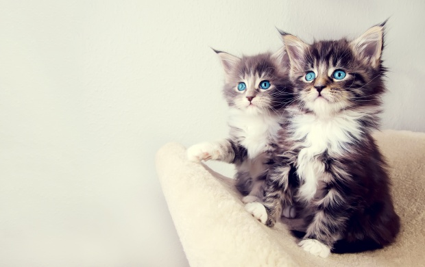 Cute Kittens Backgrounds (click to view)