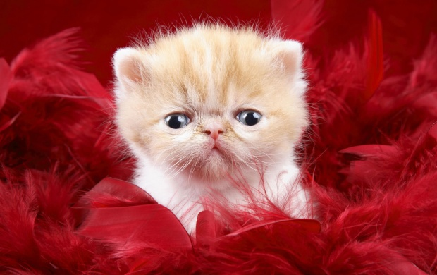 Cute Kitty as a Love Gift (click to view)