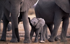 Cute little elephant