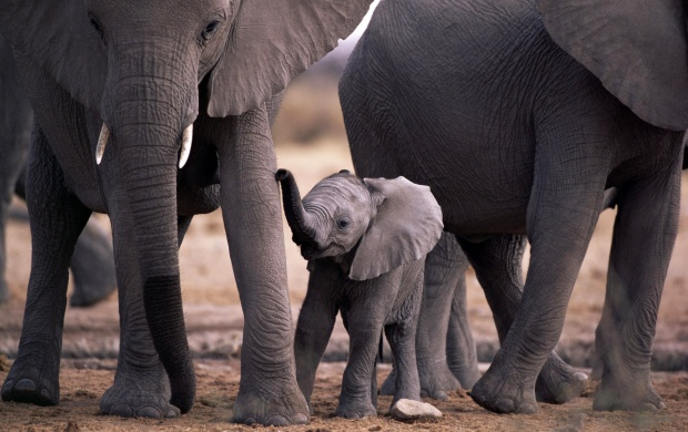 Cute little elephant (click to view)