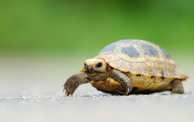 Cute Little Turtle (click to view)