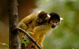 Cute Monkeys
