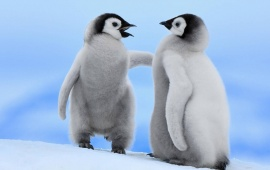 Cute Penguins In Snow