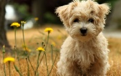 Cute Puppy In The Garden