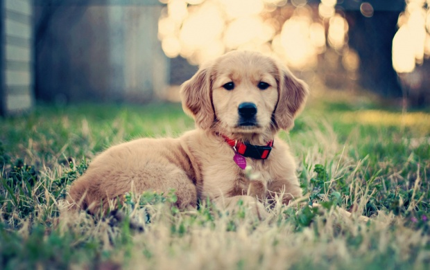 Cute Puppy In The Grass (click to view)