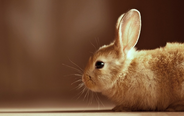 Cute Rabbit (click to view)