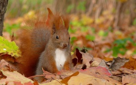 Cute Squirrel With Leaves