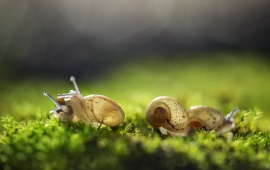 Cute Three Snail And Nature Background