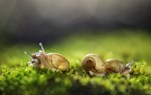 Cute Three Snail And Nature Background (click to view)