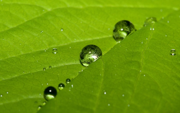 Cute water drops on a leaf (click to view)