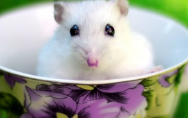 Cute White Mouse In Cup