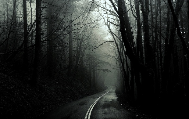 Dark Forest Road (click to view)