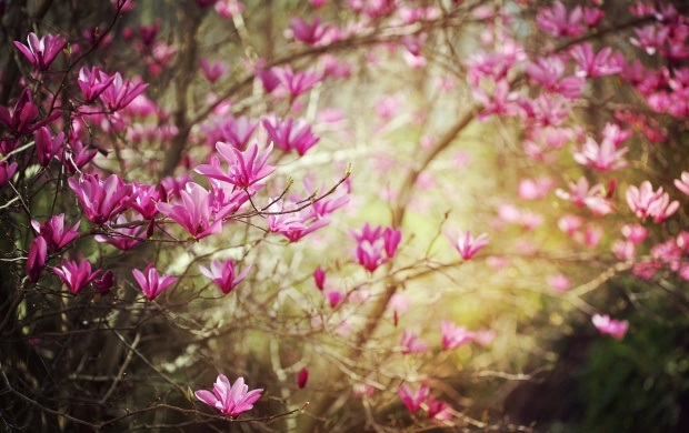 Dark Pink Spring Flower (click to view)