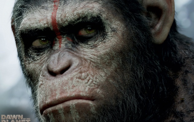 Dawn Of The Planet Of The Apes 2014 (click to view)