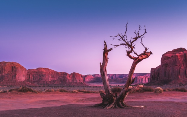 Dead Desert Tree (click to view)