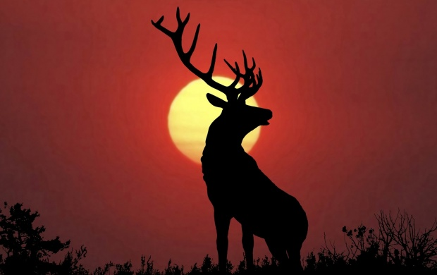 Deer At Sunset (click to view)