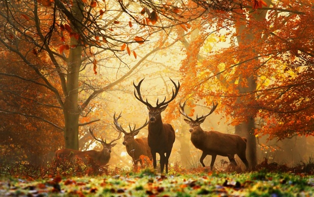 Deer Family In Forest (click to view)