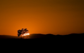 Desert Sunset Tree