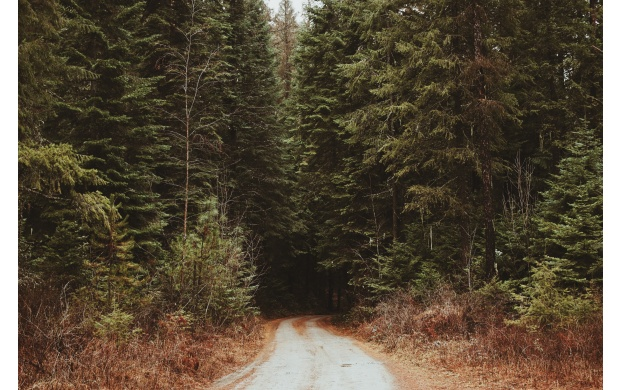 Dirt Road Into The Forest (click to view)