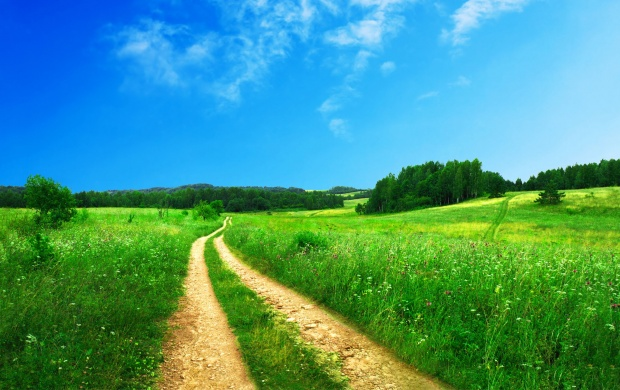 Dirt Road on a Green Field (click to view)