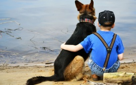 Dog And Boy Friendship