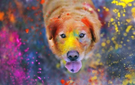 Dog Explosion Of Colors