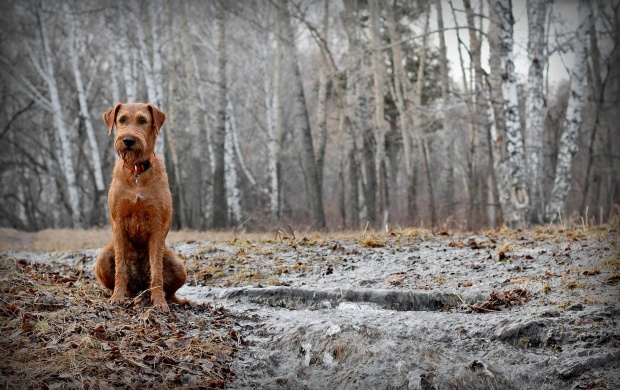 Dog In Spring Forest (click to view)