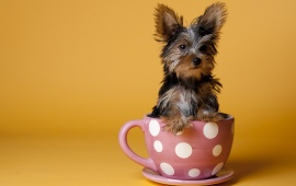 Dog In Tea Cup