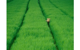 Dog On Green Field