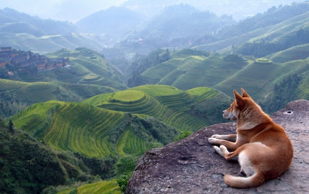 Dog View Landscape (click to view)
