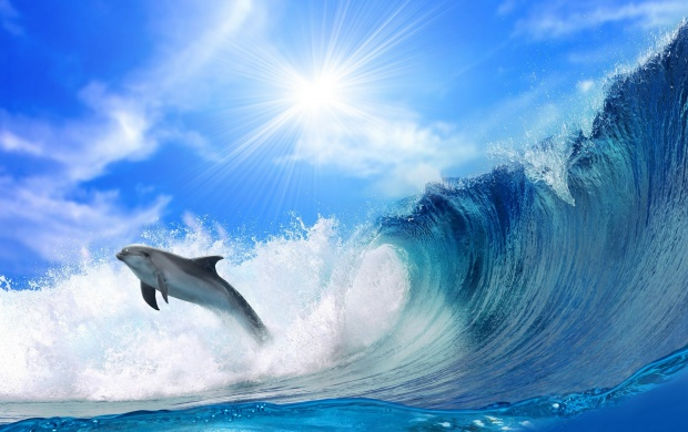 Dolphin Dive on Wave (click to view)