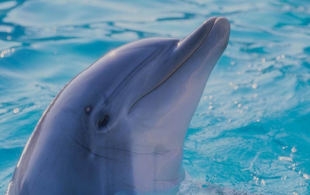 Dolphin Face (click to view)