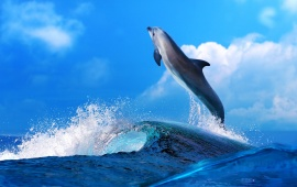 Dolphin Mood Fun Happy