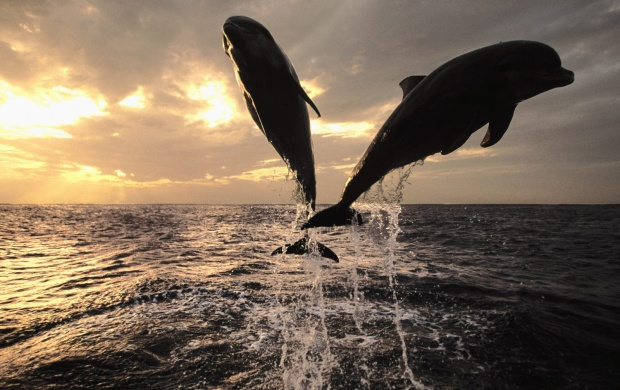 Dolphins (click to view)