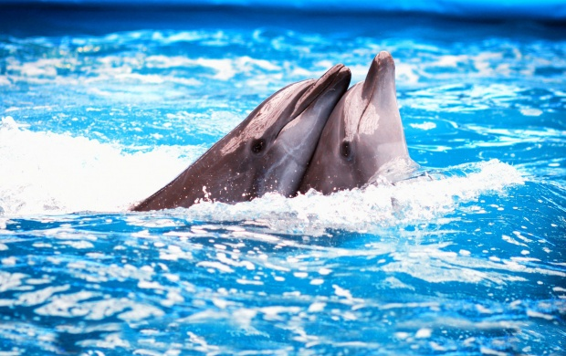 Dolphins Couple (click to view)