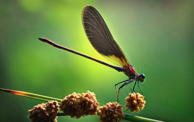 Dragonfly (click to view)