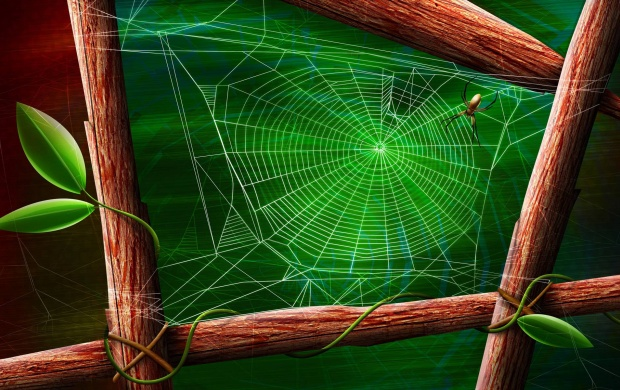 Drawing of Spider on His Web (click to view)