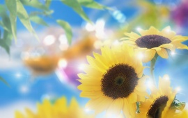 Dreamy Summertime, Sunflowers And Sunlight