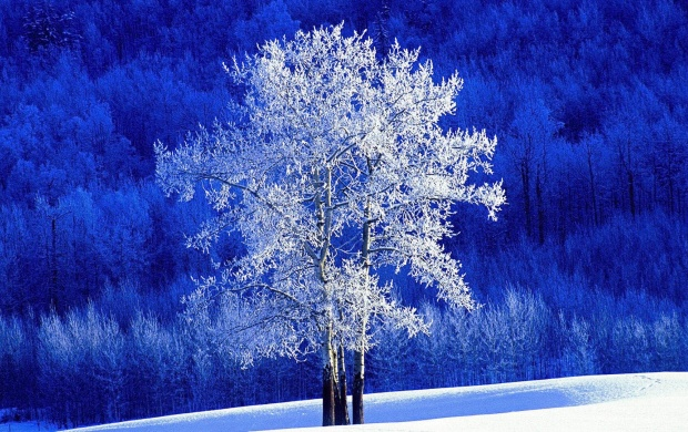 Dreamy White Tree (click to view)
