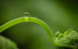 Drop On Green Germ