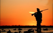 Ducks Hunting