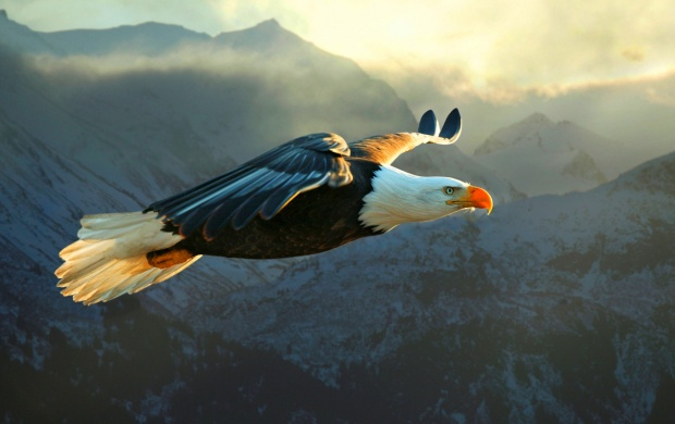 Eagle Flight On Mountain (click to view)
